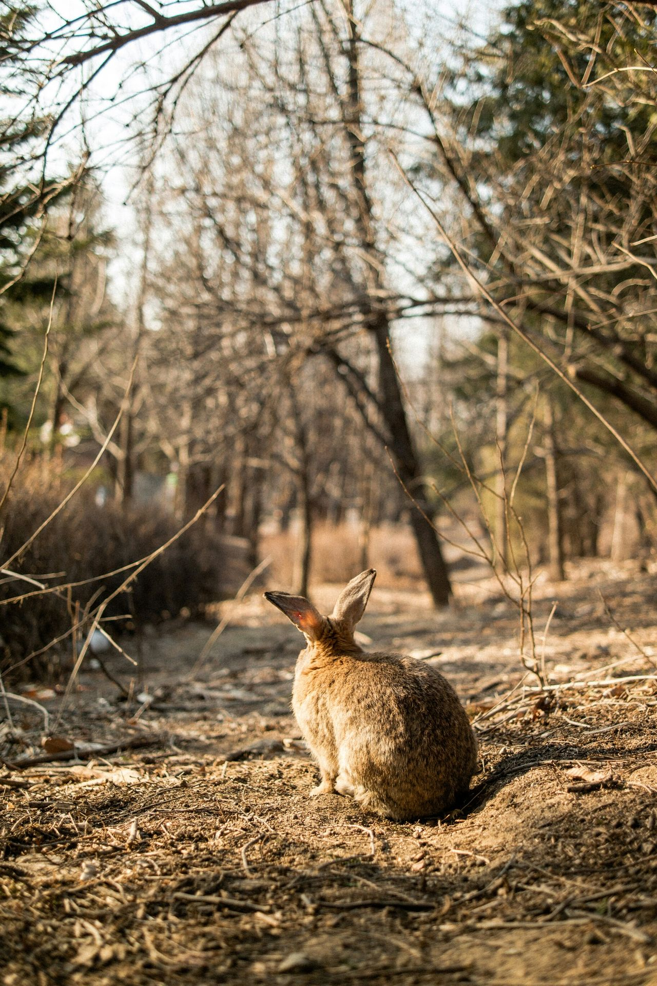 Beautiful stock photos of rabbit, Animal Themes, Animals In The Wild, Brown, Day
