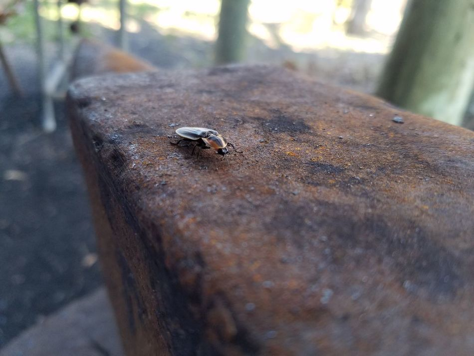 Bug on anvil, Day Outdoors Nature Close-up No People Tranquility Adapted To The City
