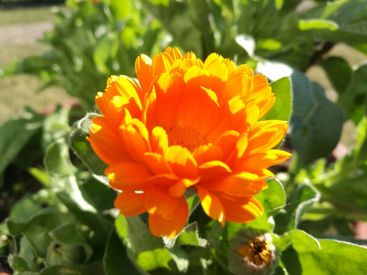 Yellow Flower Flower Green Shiny Medicinal Plant