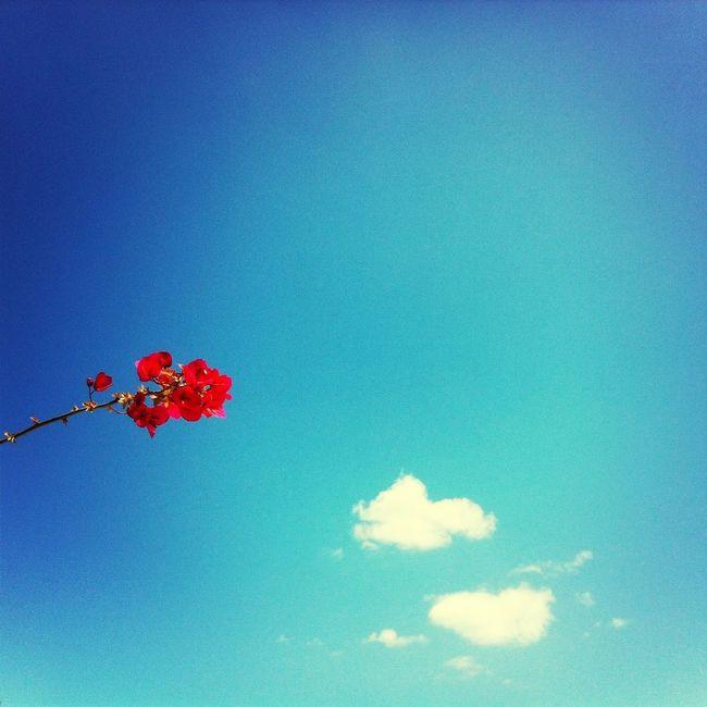 Il cielo che ho salutato... At Home Blue Sky Memories