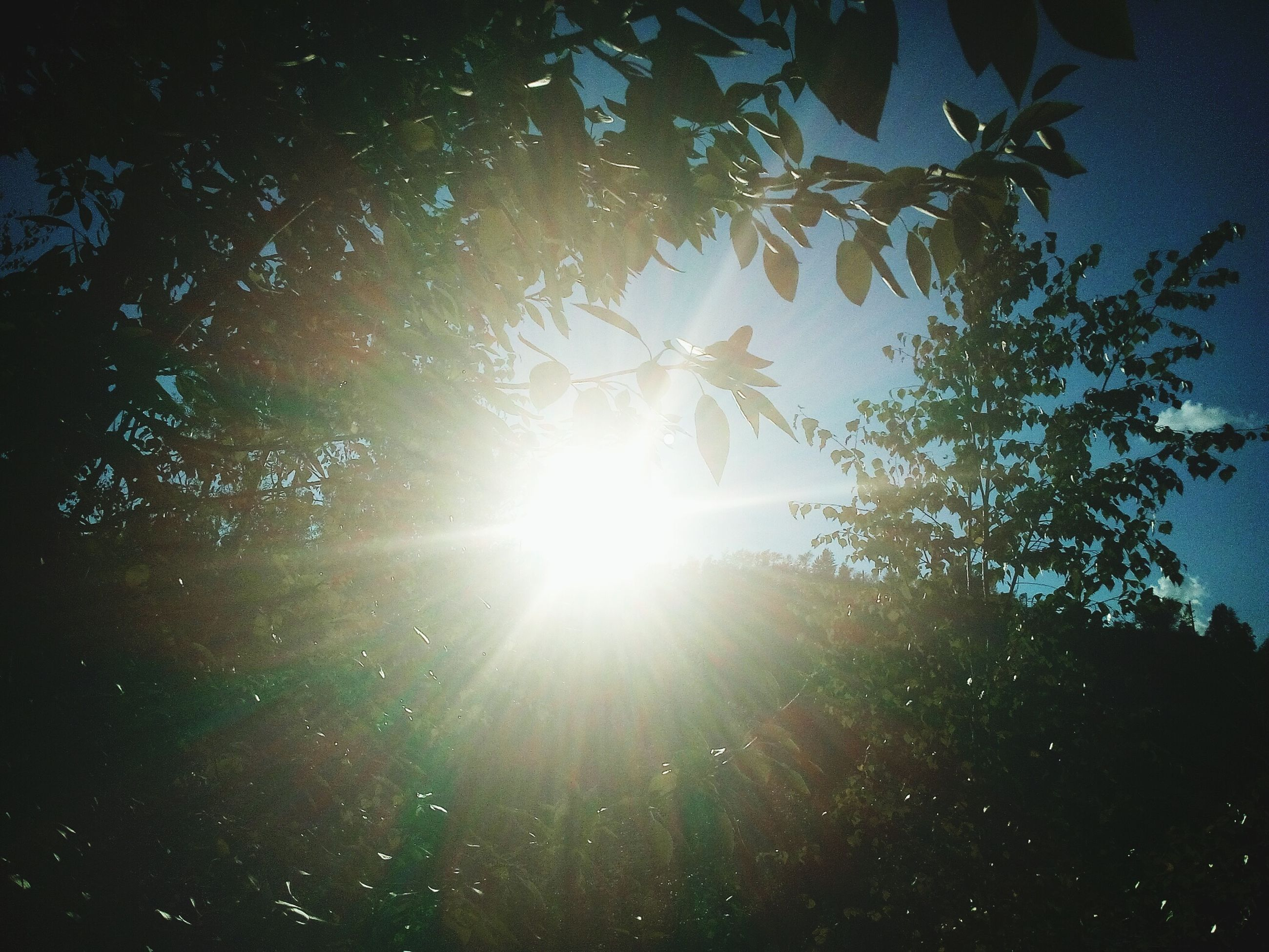 sun, sunbeam, tree, sunlight, lens flare, low angle view, tranquility, beauty in nature, nature, growth, sky, tranquil scene, bright, scenics, sunny, back lit, no people, outdoors, idyllic, day