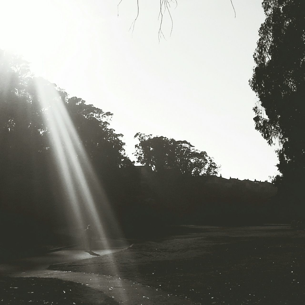 Darkness And Light Sterngrove Blackandwhite