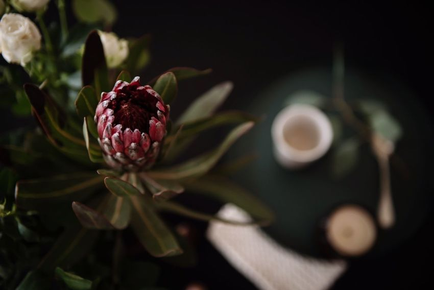 Flower No People Flower Head Protea Protea Flower Close-up Petal Lifestyle Home Decor Flowers_collection Decoration With Flowers Table Setting From Above  Dark Low Key Mood Still Life Coffee Coffee Time Kitchen Table Moments Breakfast