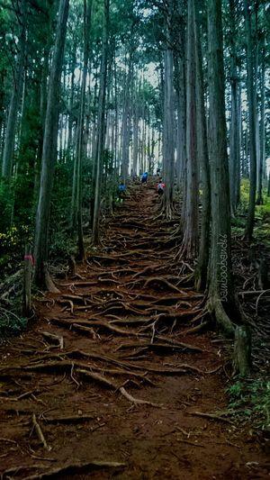 22~23の2日間、秩父、飯能で開催された第一回fantrails 100k に行ってきました~(*^^*) 100k で累積標高7617mのエグいレースでしたが無事完走できました~🎵(*≧∀≦*)✌ Enjoying Life Japan Holiday Memories Mountain Good Memory Trail Running Mountain View Race