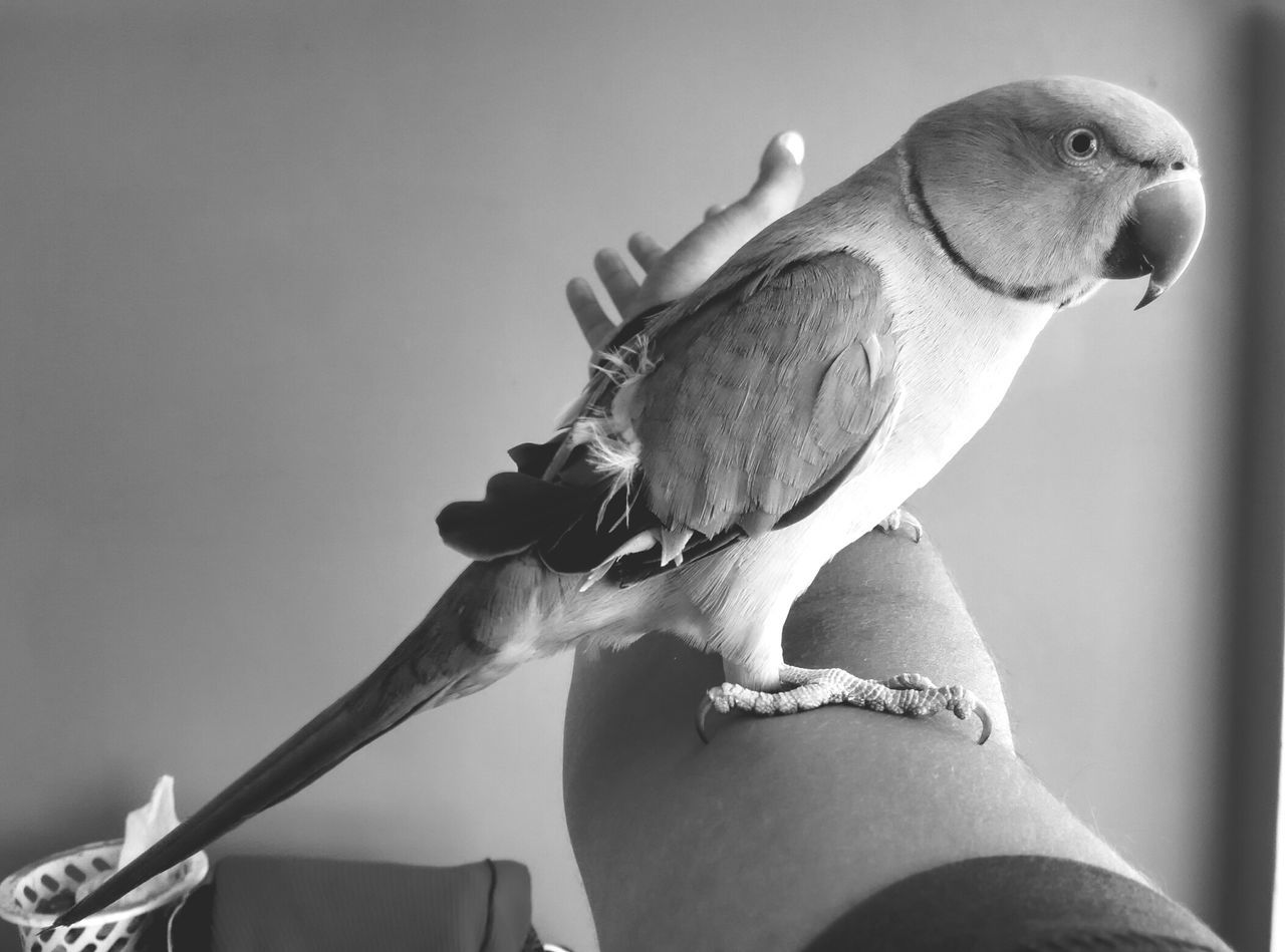 bird, animal themes, one animal, human hand, perching, animals in the wild, one person, animal wildlife, human body part, focus on foreground, day, outdoors, low angle view, close-up, real people, nature, people