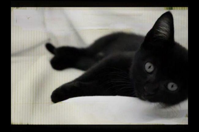 Little kitty so cutie... ??❤️ Animals Cat Kitty Cute Pets
