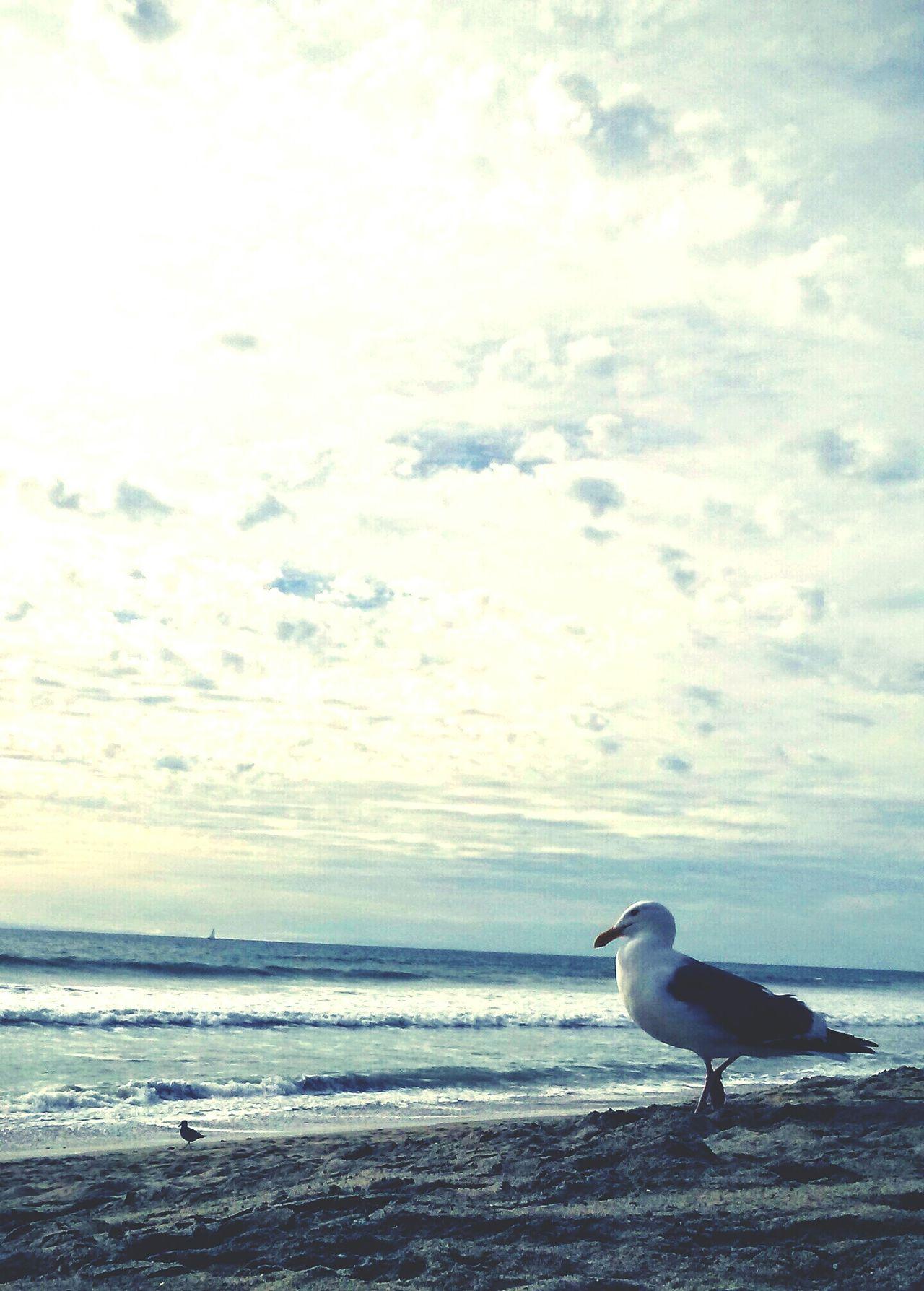 Taking Photos Enjoying Life Sky And Clouds Sand Ocean Carlsbad Beach Beach Photography Beach Chicken Seagull Seagulls