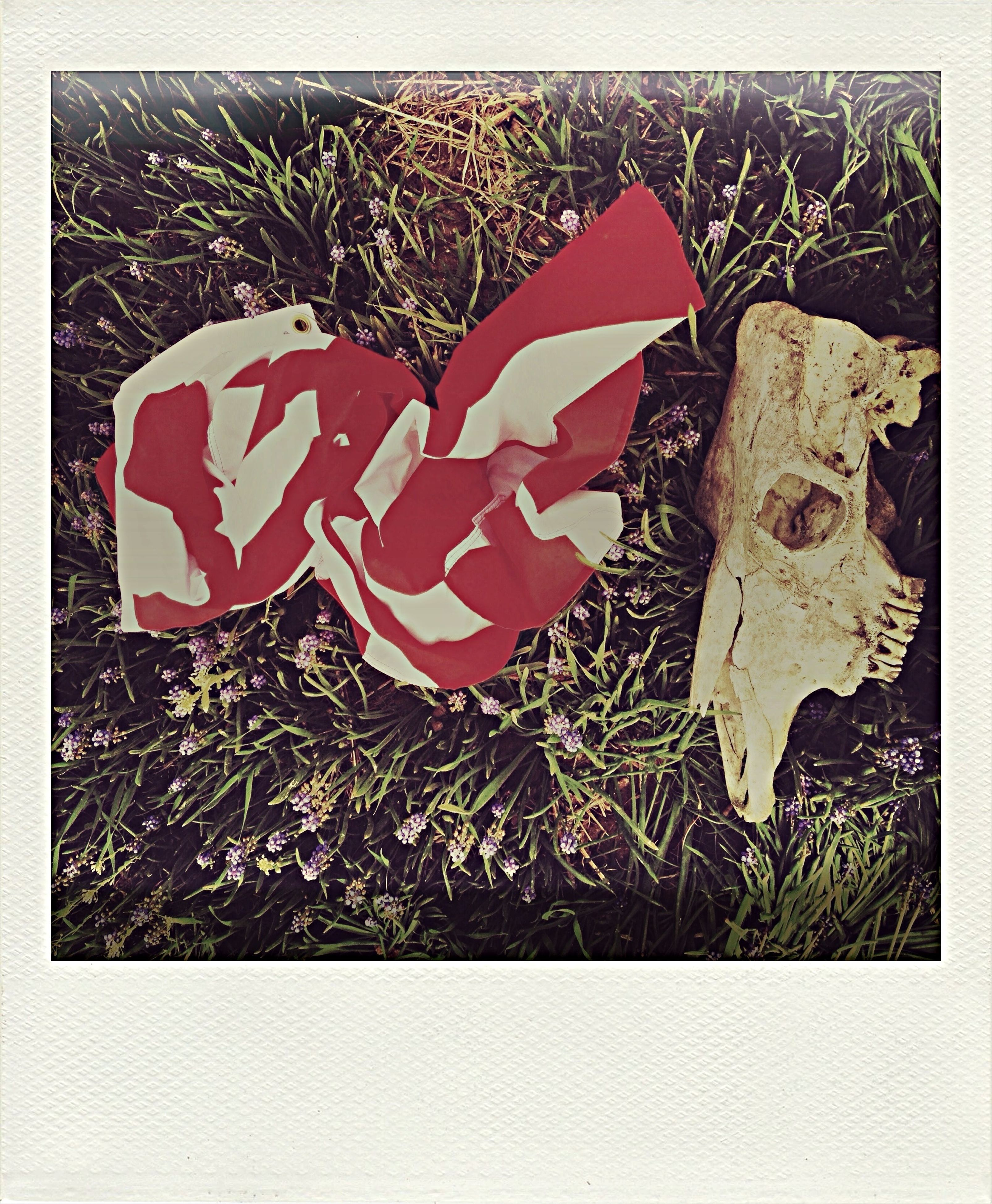 transfer print, auto post production filter, high angle view, red, close-up, creativity, art and craft, art, grass, no people, plant, day, leaf, still life, outdoors, textured, human representation, growth, field, wall - building feature