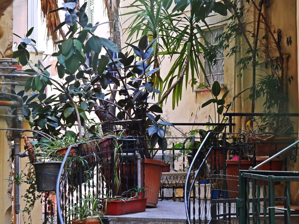 I want to live in a house covered in plants ...if I only had a greener thumb 🌿 Plantproblem Nature On Your Doorstep Steps And Staircases Urban Jungle Eye Em Around The World Italia Lifestyles The Week On EyeEm EyeEm Gallery Street Photography Lifestyle Photography Still Life Walking Around Taking Pictures Focus On Details Urban Lifestyle Discover Your City Urban Perspectives Sidewalk Streetphotographer Pottedplants Plants Collection EyeEm Nature Lover Doorway in San Remo