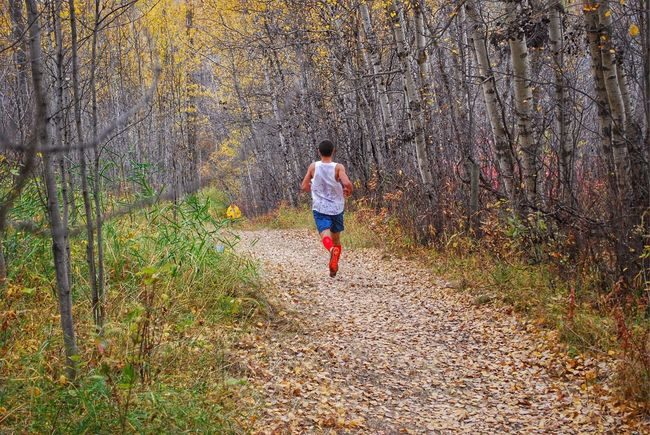 The Loneliness of the Long Distance Runner. Forest Nature Change Of Seasons The Way Forward Autumn Cross-country Running