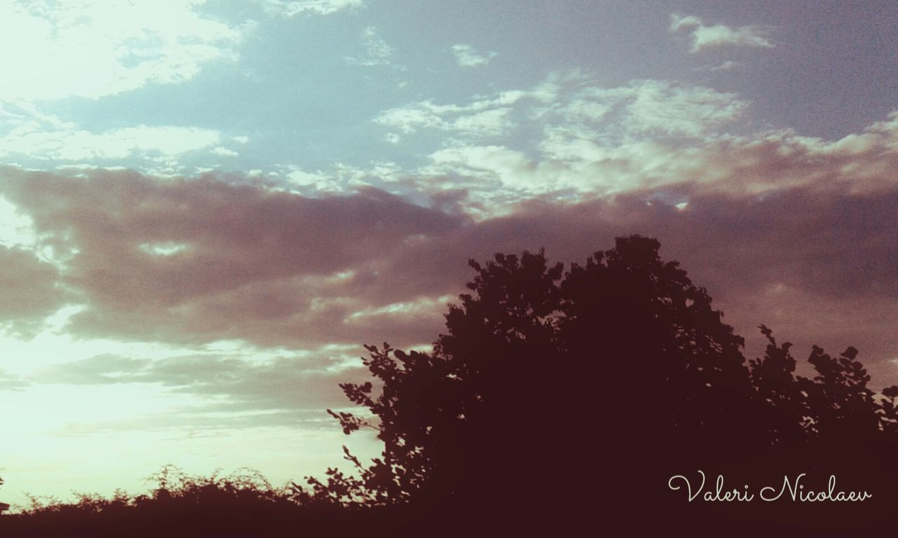sky, tree, cloud - sky, silhouette, communication, day, low angle view, outdoors, growth, no people, scenics, nature, beauty in nature