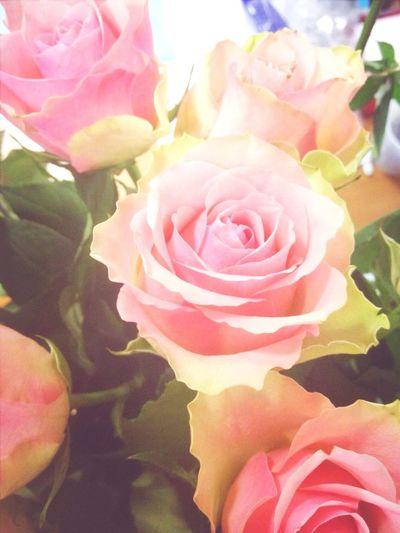 Flowers :) Piter  Narva