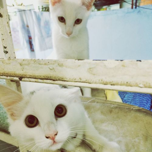 Cat♡ Eyes Brother