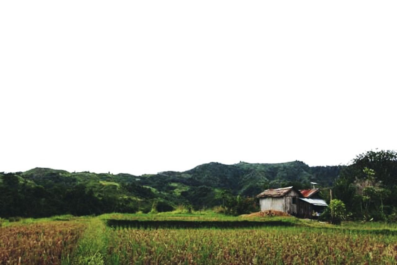 agriculture, field, landscape, clear sky, outdoors, no people, rural scene, tree, nature, architecture, scenics, day, rice paddy, sky