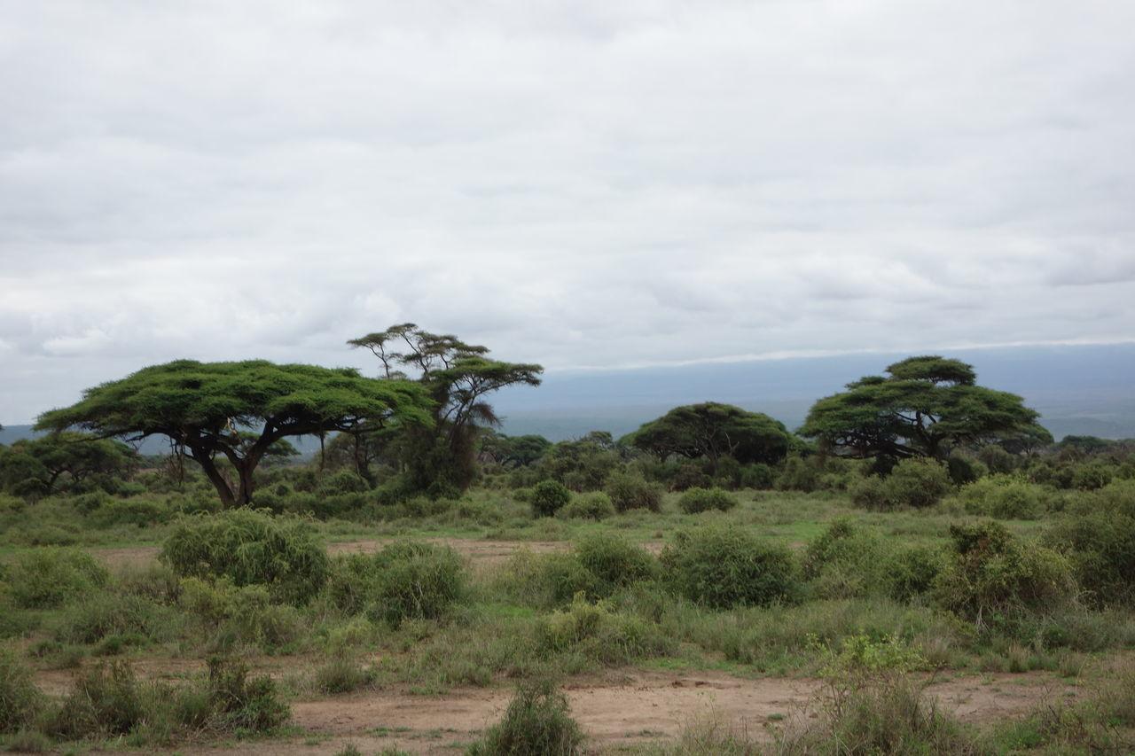 Kenya Kenyanphotographer Landscape Nairobi Nature Outdoors Tree TreePorn