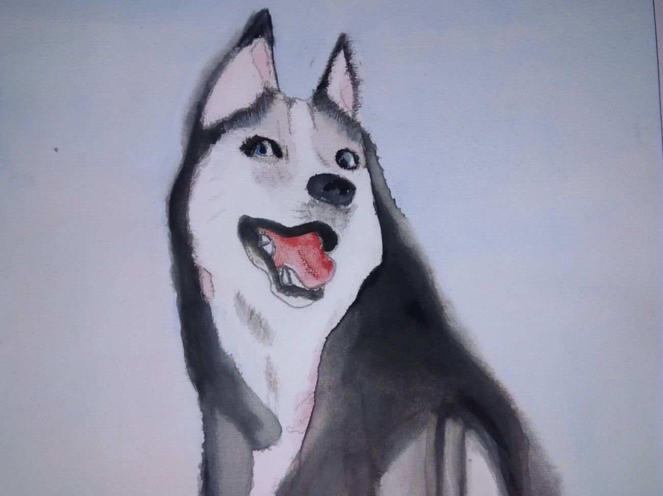 Husky ♡ Drawing ✏ Acuarelas Love Drawing ❤