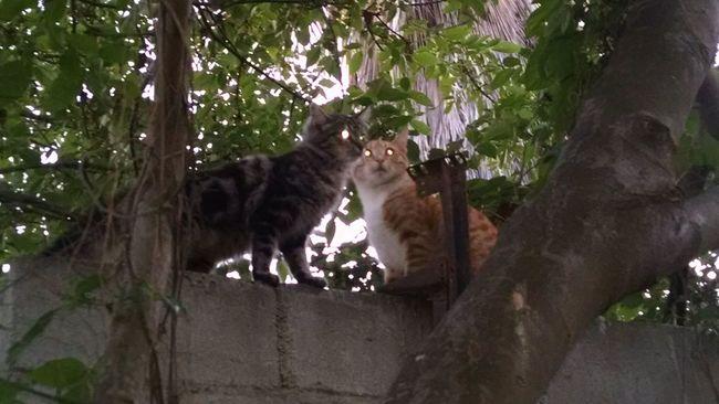 Catsplaydate Cat Eyes CATPLAY Arboles Nature