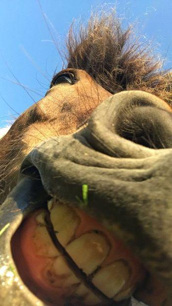 Horse Icelandic Horse Smile Theeth Blue Sky Happy EyeEmNewHere The Architect - 2017 EyeEm Awards The Portraitist - 2017 EyeEm Awards The Photojournalist - 2017 EyeEm Awards The Architect - 2017 EyeEm Awards The Great Outdoors - 2017 EyeEm Awards The Street Photographer - 2017 EyeEm Awards The Street Photographer - 2017 EyeEm Awards Out Of The Box Place Of Heart Live For The Story