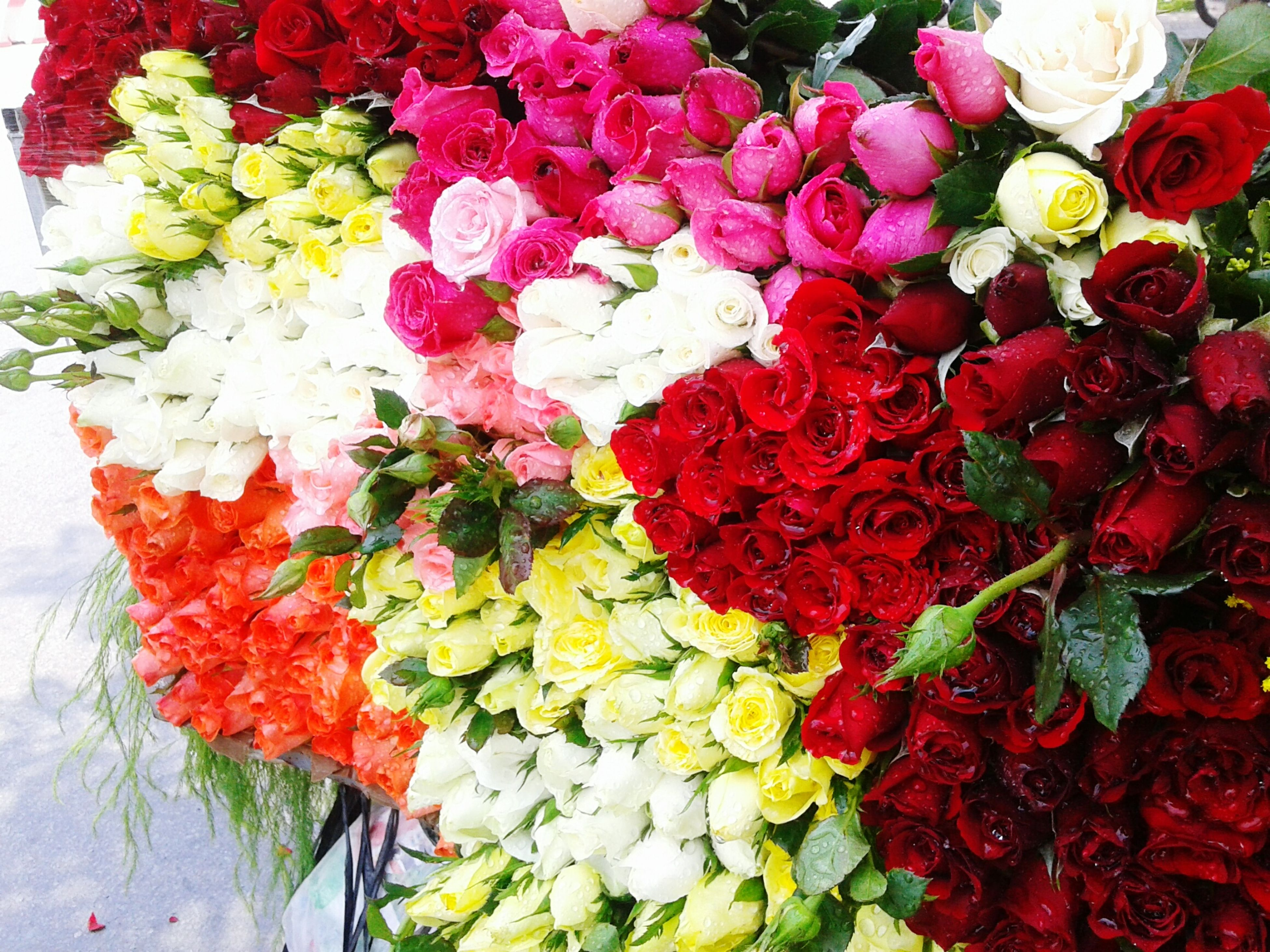 flower, freshness, red, high angle view, fragility, plant, petal, variation, growth, indoors, pink color, multi colored, beauty in nature, abundance, leaf, nature, bouquet, no people, wall - building feature, close-up