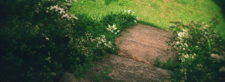Koduckgirl Grass Nature No People Green Color Beauty In Nature Outdoors Country House Film Sprocket Rocket Panorama Country Life Steps And Staircases Steps