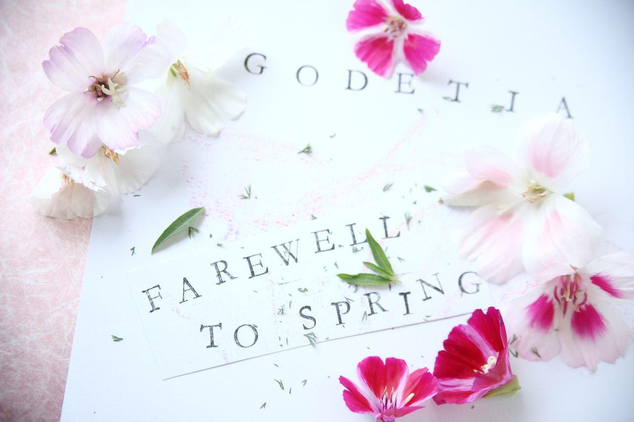 Beauty In Nature Biology Botany Communication Farewell To Spring Flowers Fresh Godetia Leaves Letters Maroon Natural Light Nature Overhead Paper Petals Pink Plants Words