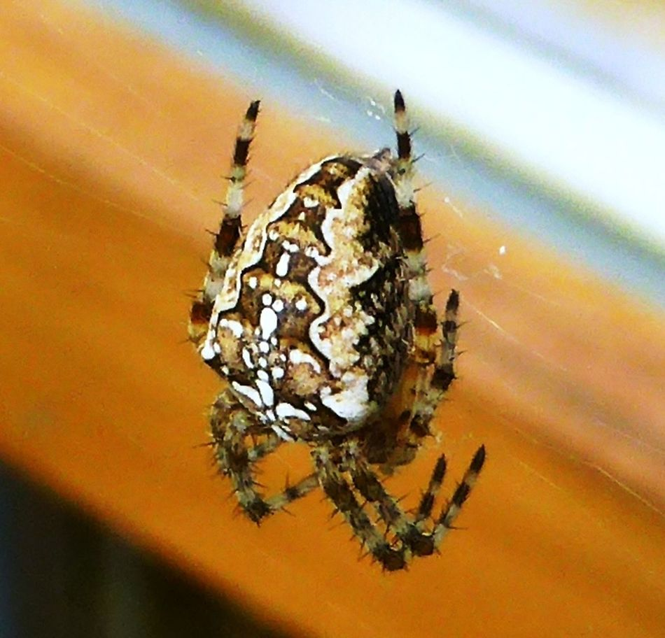 Animal Themes Animals In The Wild Arthropod Beauty In Nature Focus On Foreground Fragility Nature One Animal