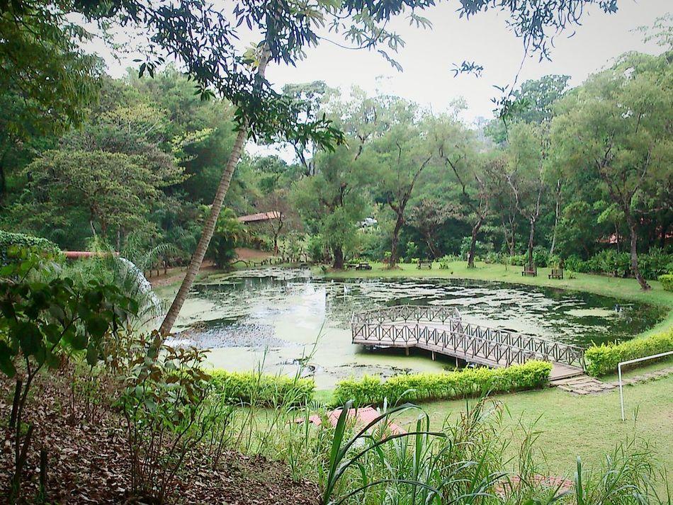 Tree Nature Water Outdoors Green Color Day Landscape Costa Rica Costarica Beauty In Nature Grecia Alajuela, Costa Rica Mountain Garden Garden Flowers Lagoon Trapiche Puravida Pura Vida ✌