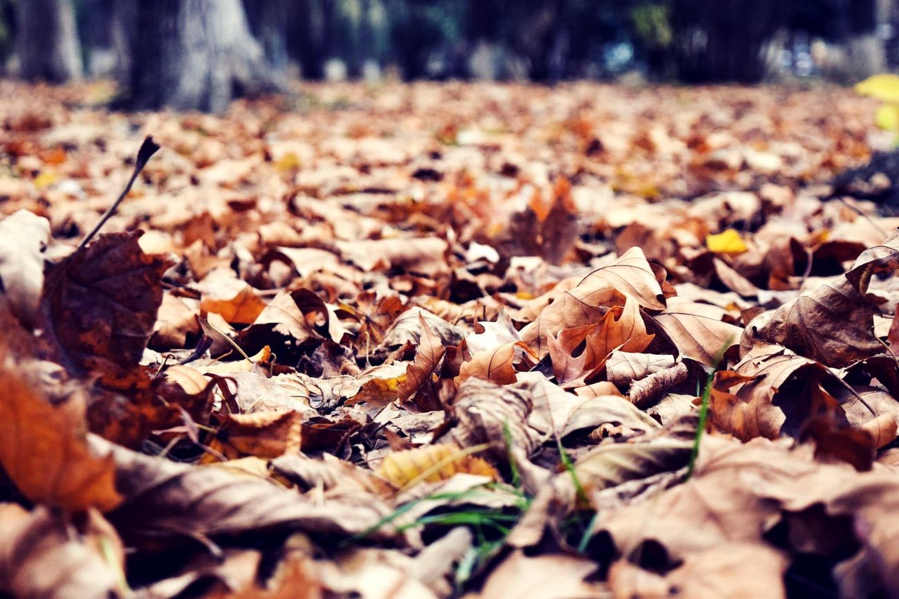 Autumn Beautiful Beauty Leaves First Eyeem Photo