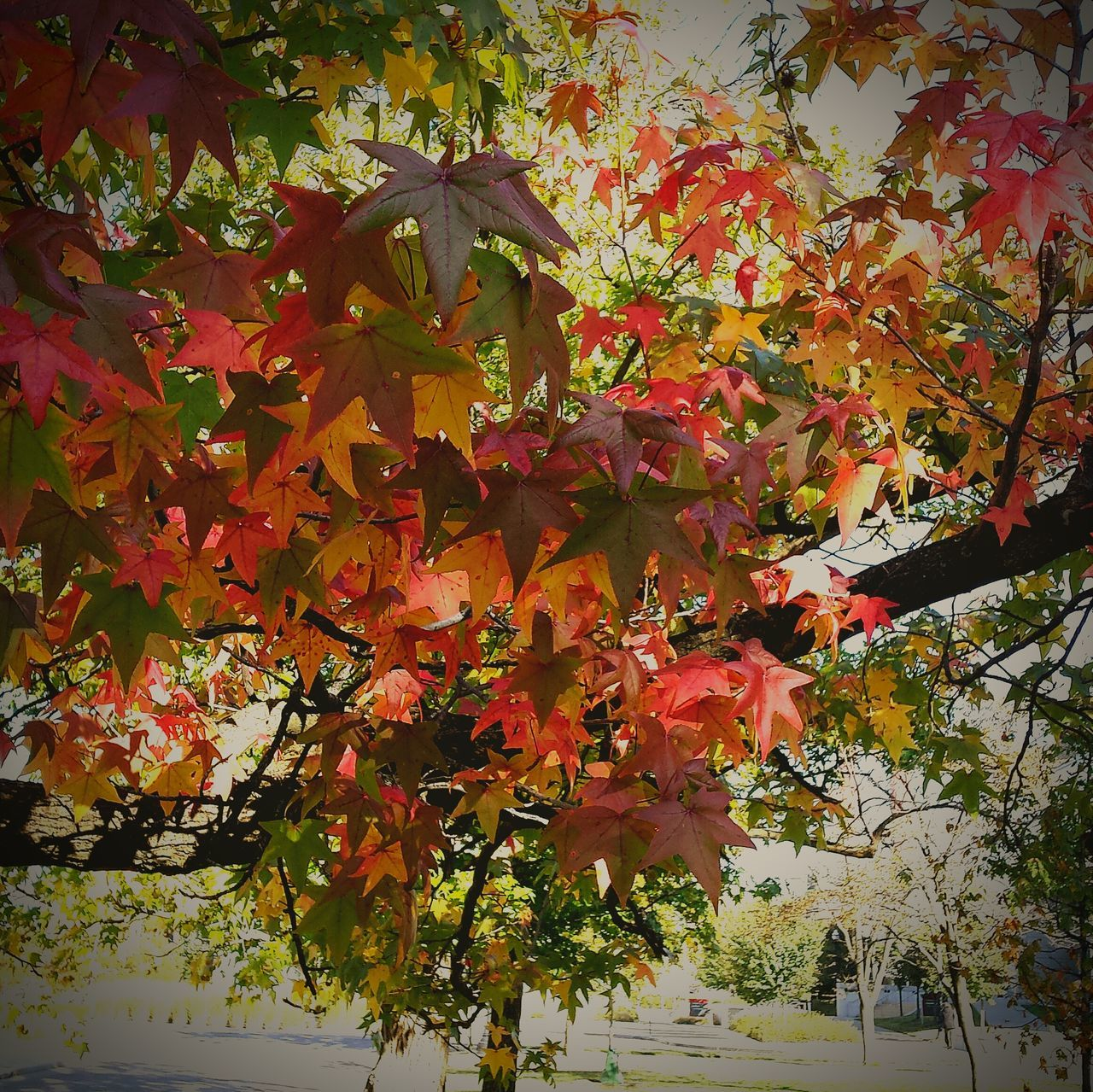 Changing leaves Working Urban Filter 4 Beautiful Nature Enjoying The View Enjoying Life Autumn Leaves Fall Leaves Beautiful Day Observing Light And Shadow