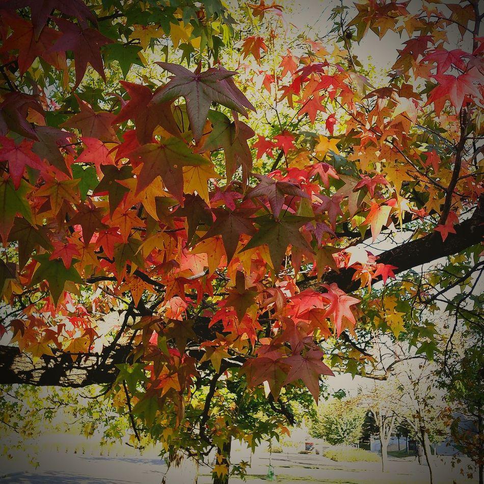 Changing leaves Working Urban Filter 4 Beautiful Nature Enjoying The View Enjoying Life Autumn Leaves Fall Leaves Beautiful Day Observing Light And Shadow