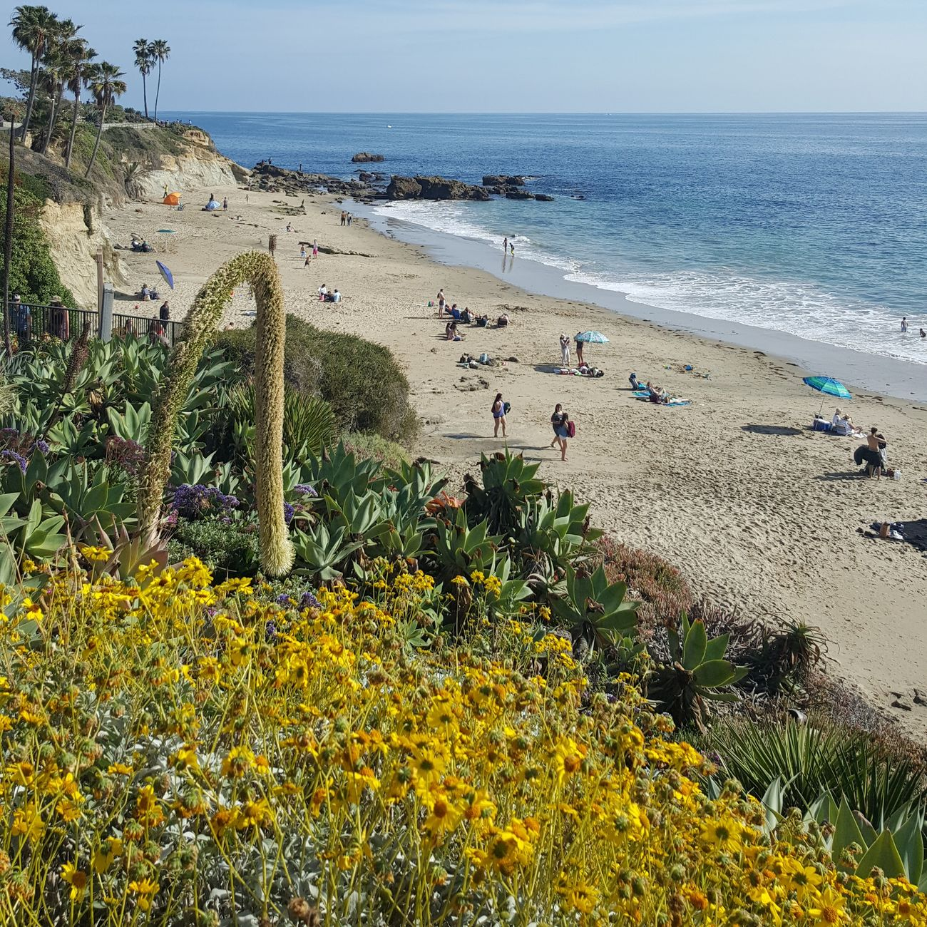Heislerpark Laguna Beach Beautiful Nature Beautiful Day