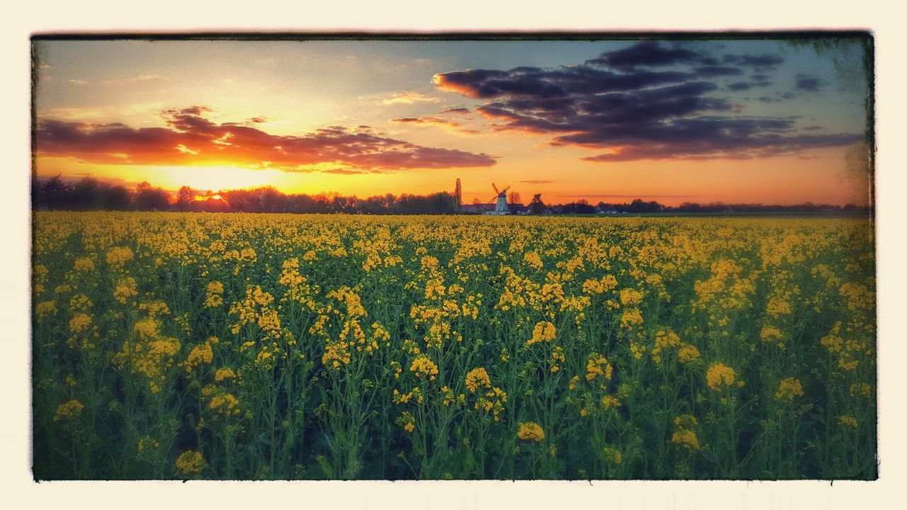 Sundown Field Beauty In Nature Agriculture Outdoors Minden Samsungphotography Samsung Photography Samsungphoto Spring Photography Samsung Galaxy S6 The Great Outdoors - 2017 EyeEm Awards