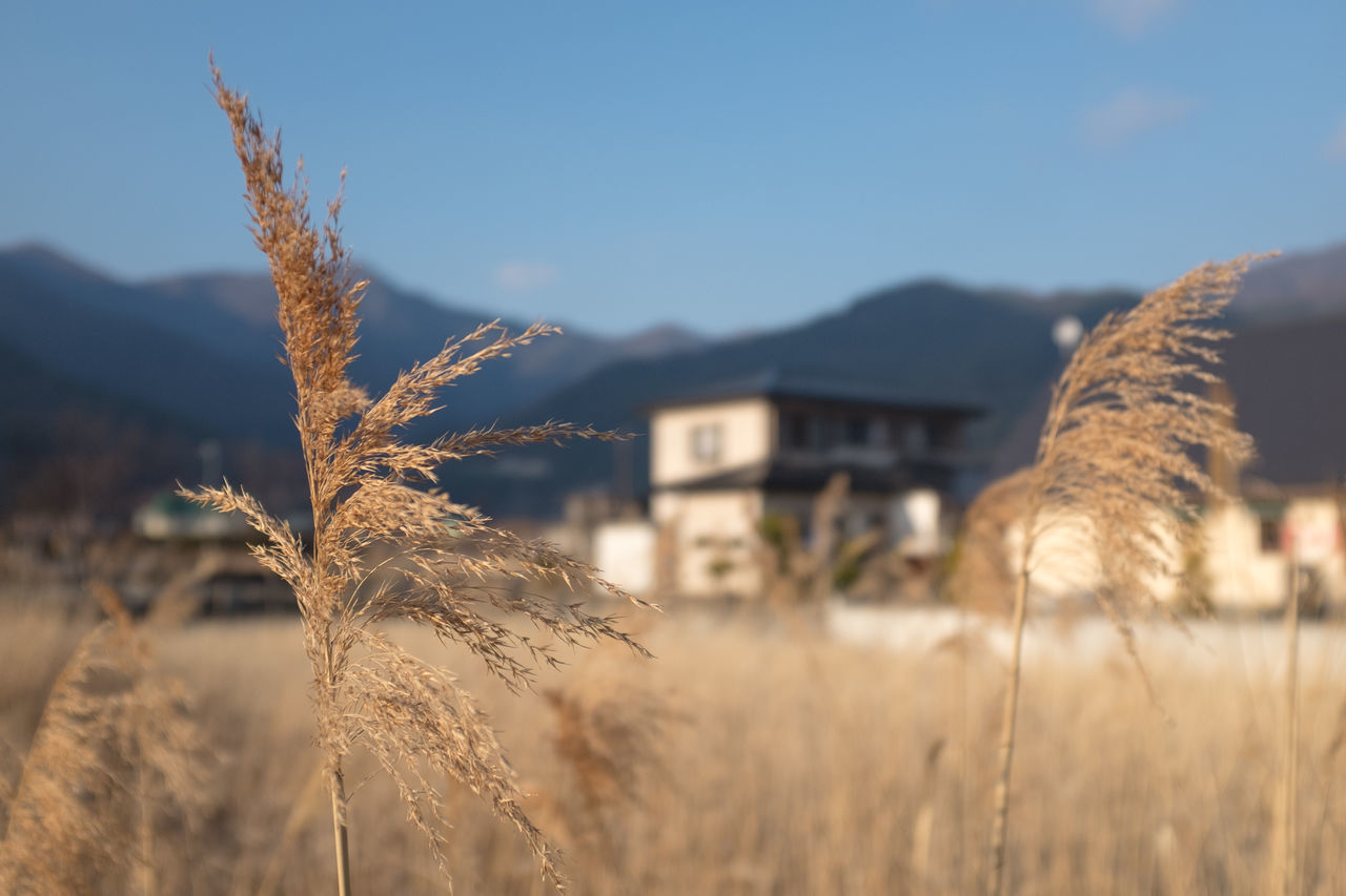 Close-Up Of Grass Growing Against Mountains