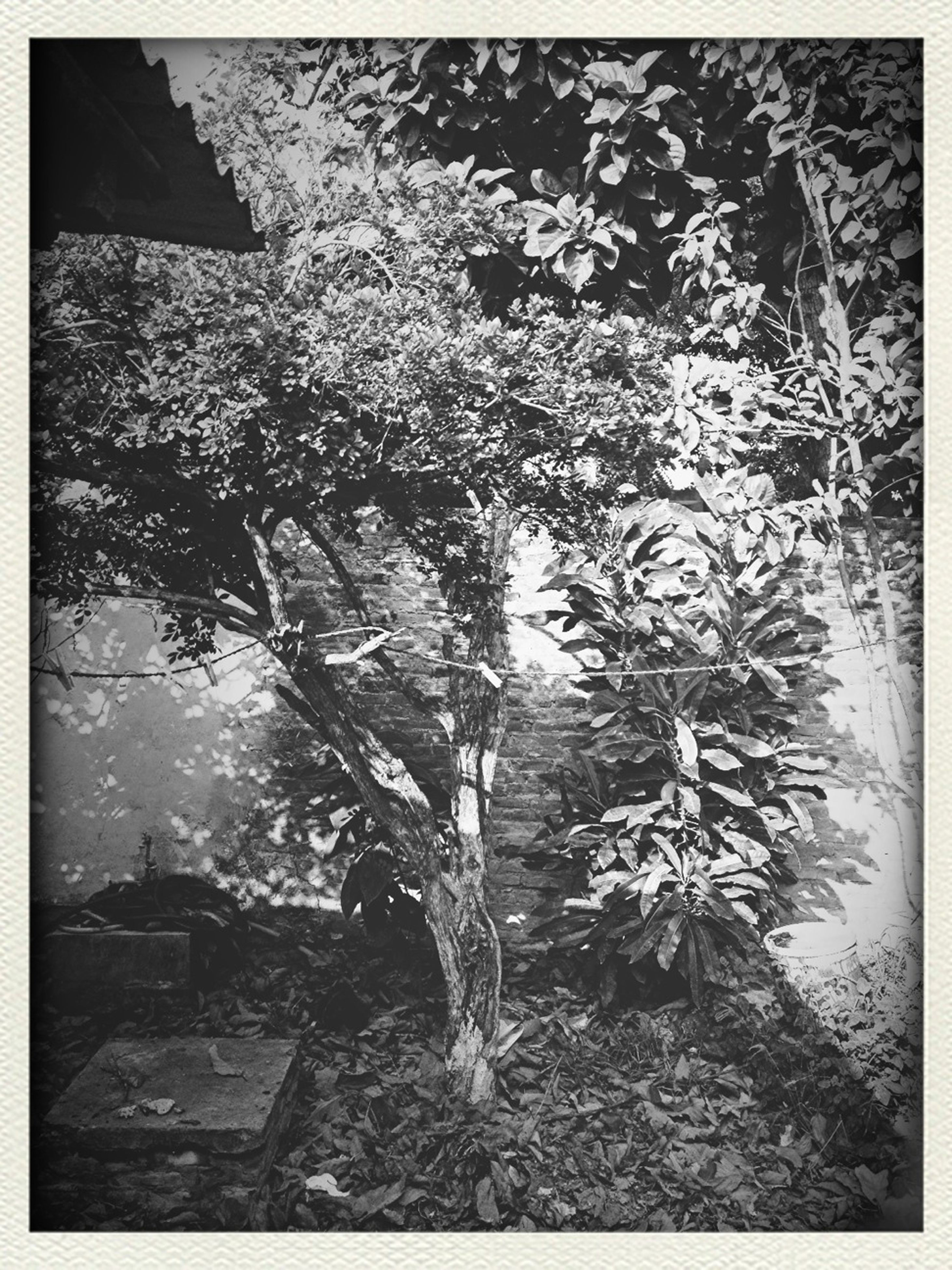 transfer print, auto post production filter, high angle view, nature, growth, water, tree, plant, day, outdoors, no people, tranquility, leaf, rock - object, beauty in nature, sunlight, branch, puddle, frame, close-up