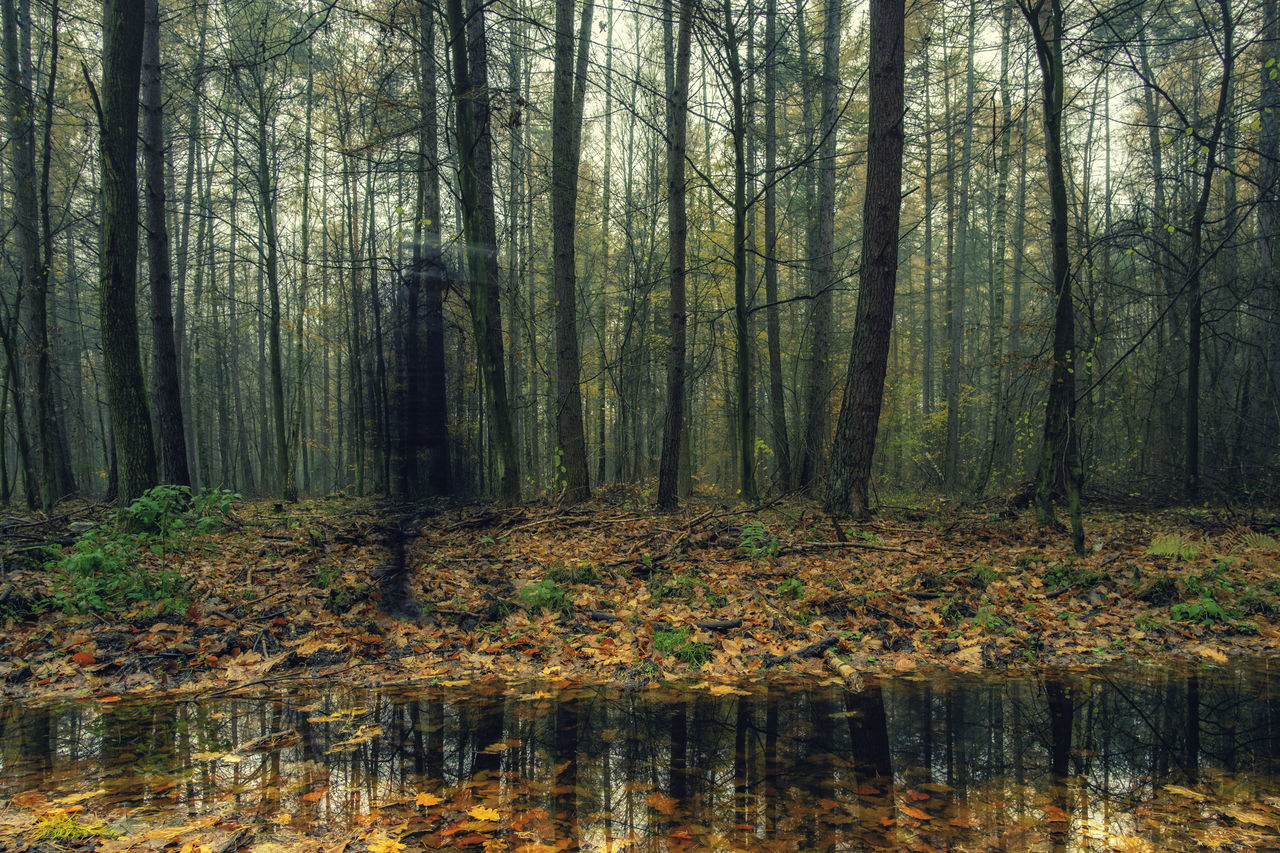 Ghost in the woods and a pond. [31/365] 2016.11.9 Today was another rainy day but luckily for me there was not much rain once I got myself into the woods. Shot with Samyang 12mm f/2 NCS CS lens set to f/8. 365 Beauty In Nature Day Forest Ghost Ghosts Growth Landscape Mirror Nature No People Non-urban Scene Outdoors Photography Pond Reflection Scenics Tranquil Scene Tranquility Tree Tree Trunk Walking Water WoodLand Woods