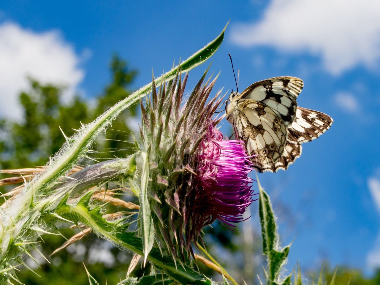 Low Angle View Of Butterfly On Pink Flower