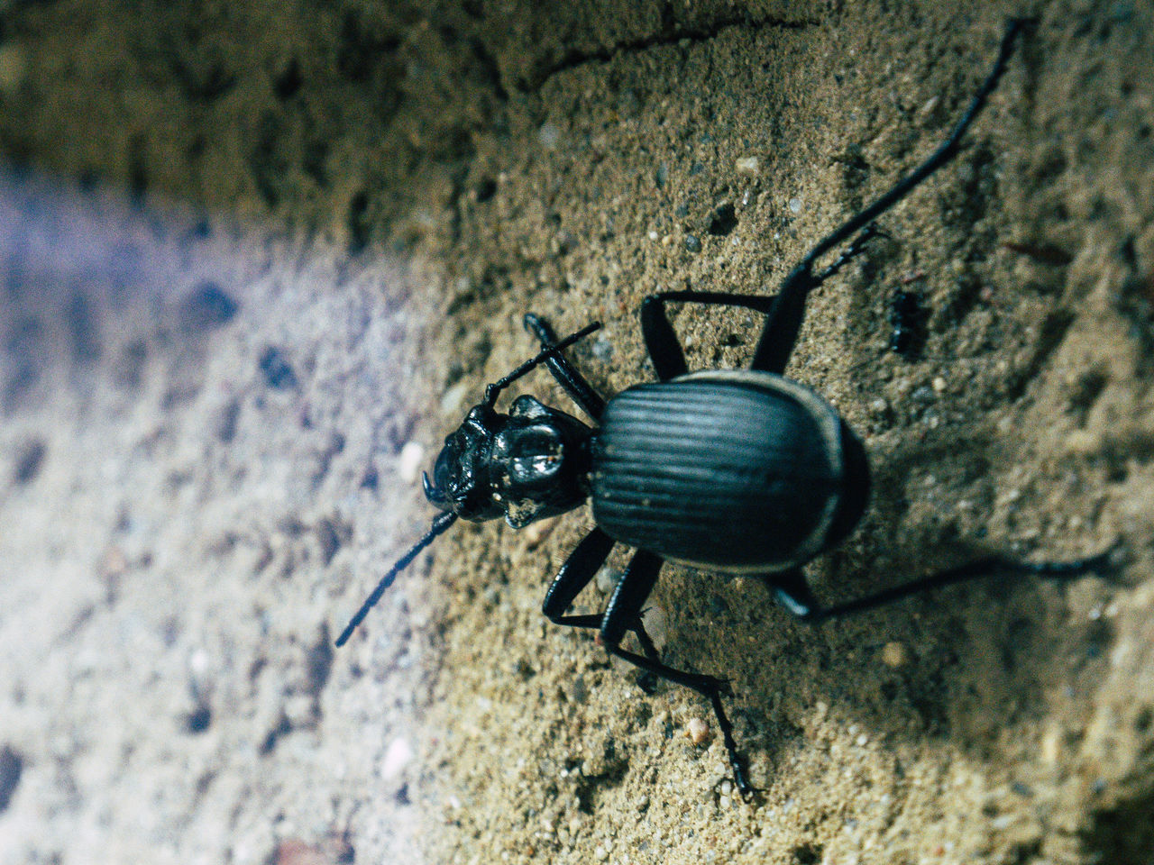 one animal, animals in the wild, animal themes, insect, close-up, wildlife, animal wildlife, no people, day, outdoors, nature