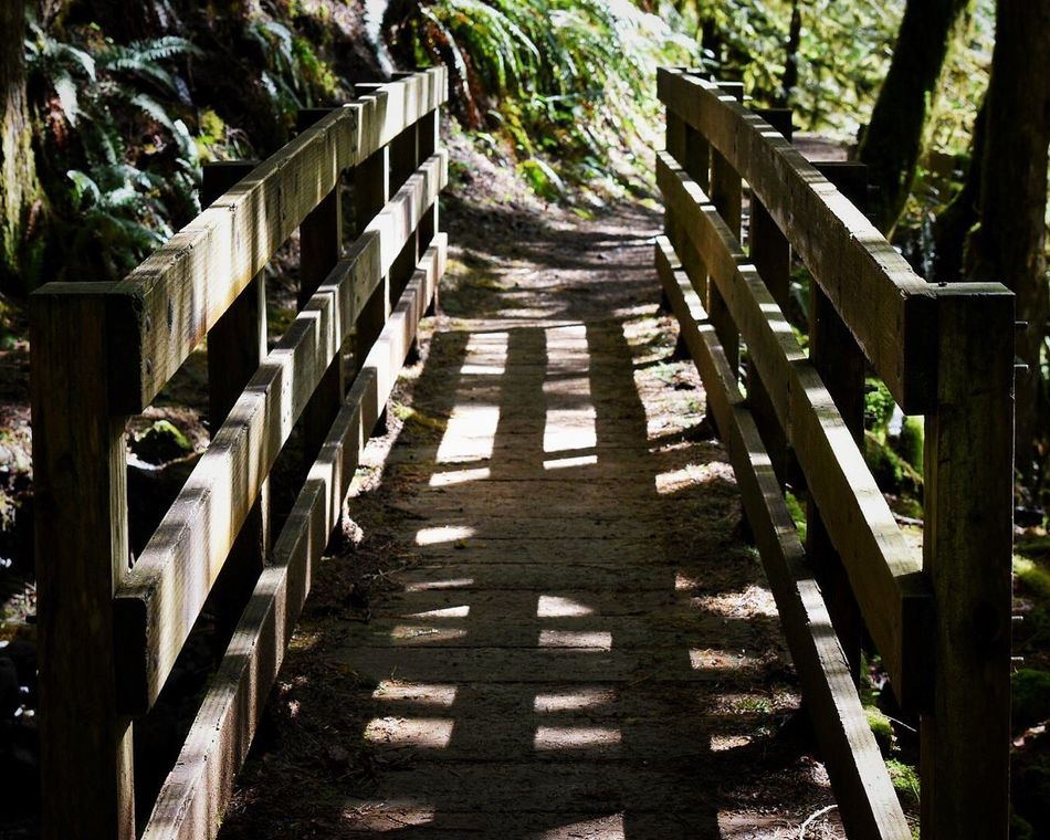 Sunlight Wood - Material Shadow Railing Day Outdoors No People Tree Nature Footbridge Bridge Nature Photography Forest Forest Photography Exploration Adventure Hikingadventures Nature_collection Nature Beauty In Nature