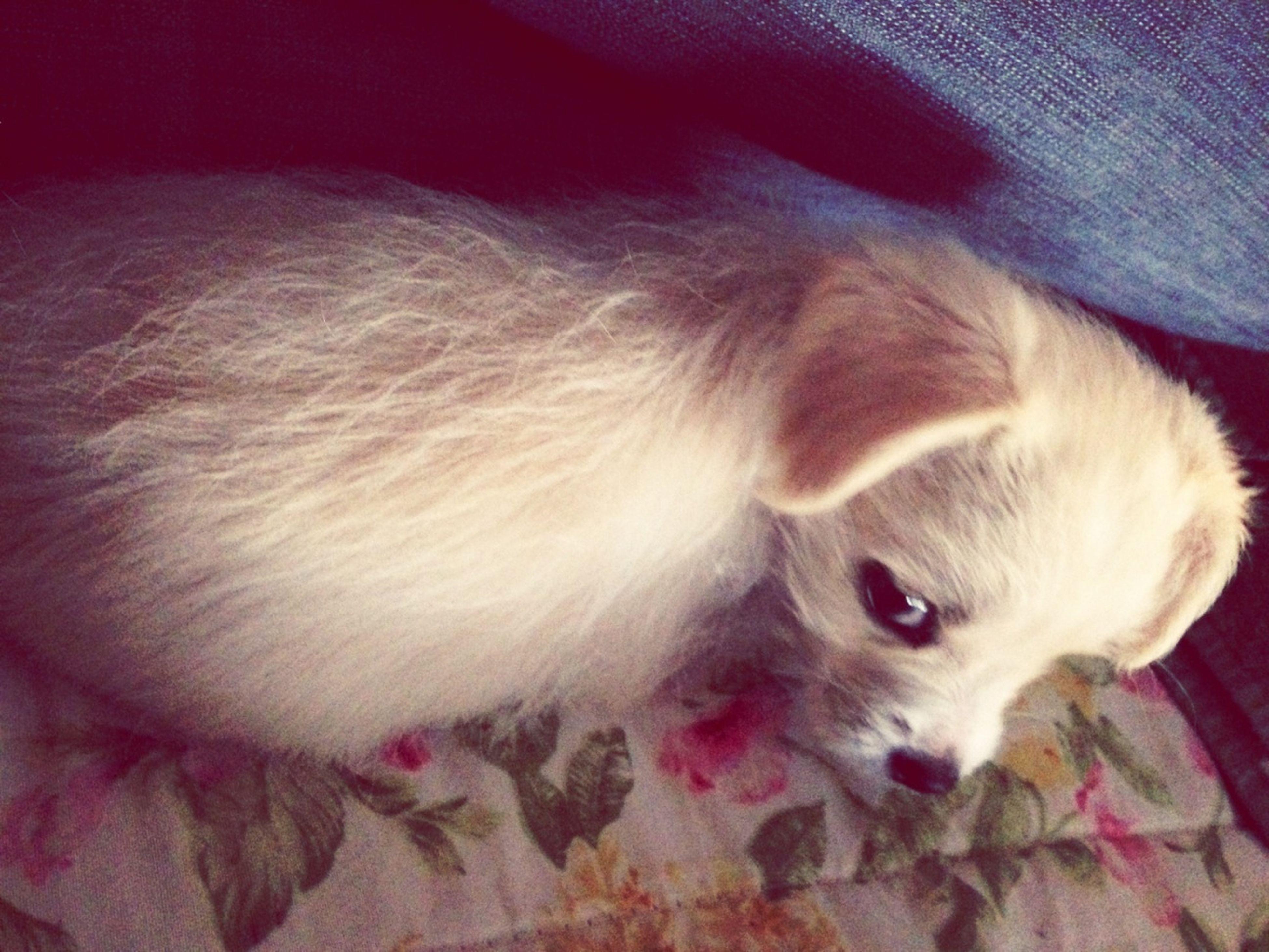 Awww Romeo <3