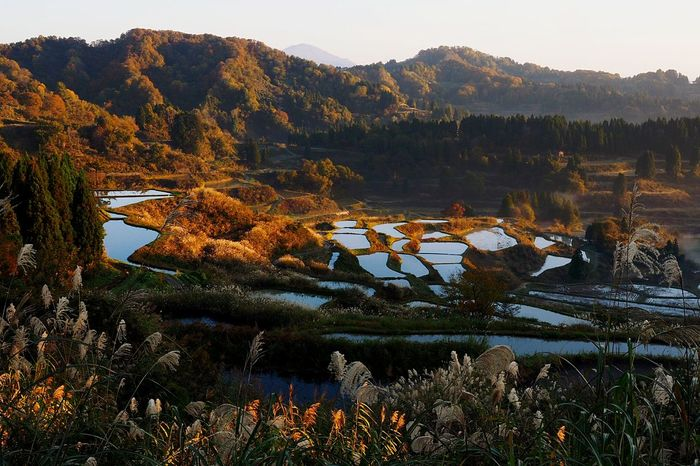 Beauty In Nature Terraced Rice Fields Early Morning Of Woodlands Beauty In Nature Great Japanese Landscape Autumn Bloom Autumn Leaves Morning Sunrise☀ Tokamathi-city Hoshi-toge Niigata Japan Autumn Leaves Is A Great Leaf Peeping