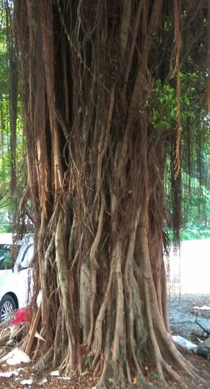 Tree Root Day Tree Trunk Outdoors Growth No People Nature Focus On Foreground Beauty In Nature Roots Roots Of Life