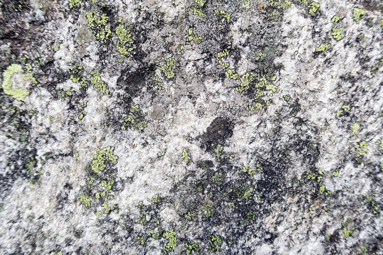 alpine rock with lichen. full frame background Alps Backgrounds Close-up Full Frame Lichen Lichen On A Rock No People Outdoors Rock Rock Background Textured