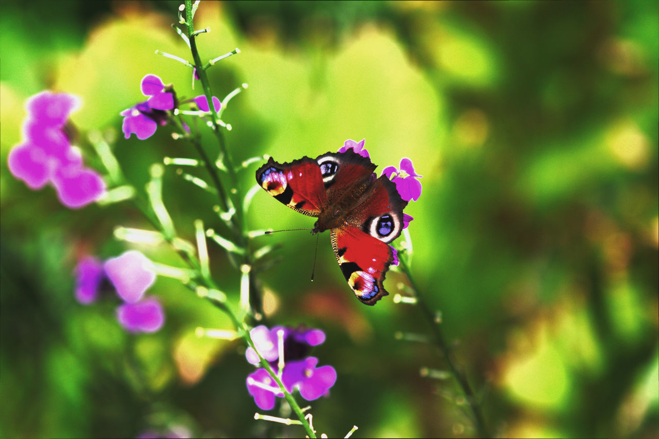 animals in the wild, insect, one animal, animal themes, nature, focus on foreground, plant, flower, butterfly - insect, purple, day, close-up, no people, outdoors, beauty in nature, animal wildlife, fragility, growth, green color, pollination, freshness