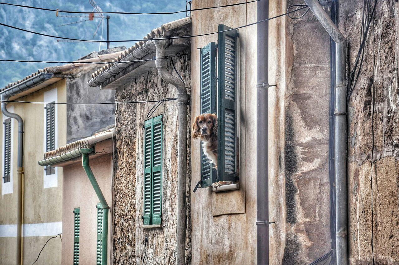 Dog Peeking Through House Window