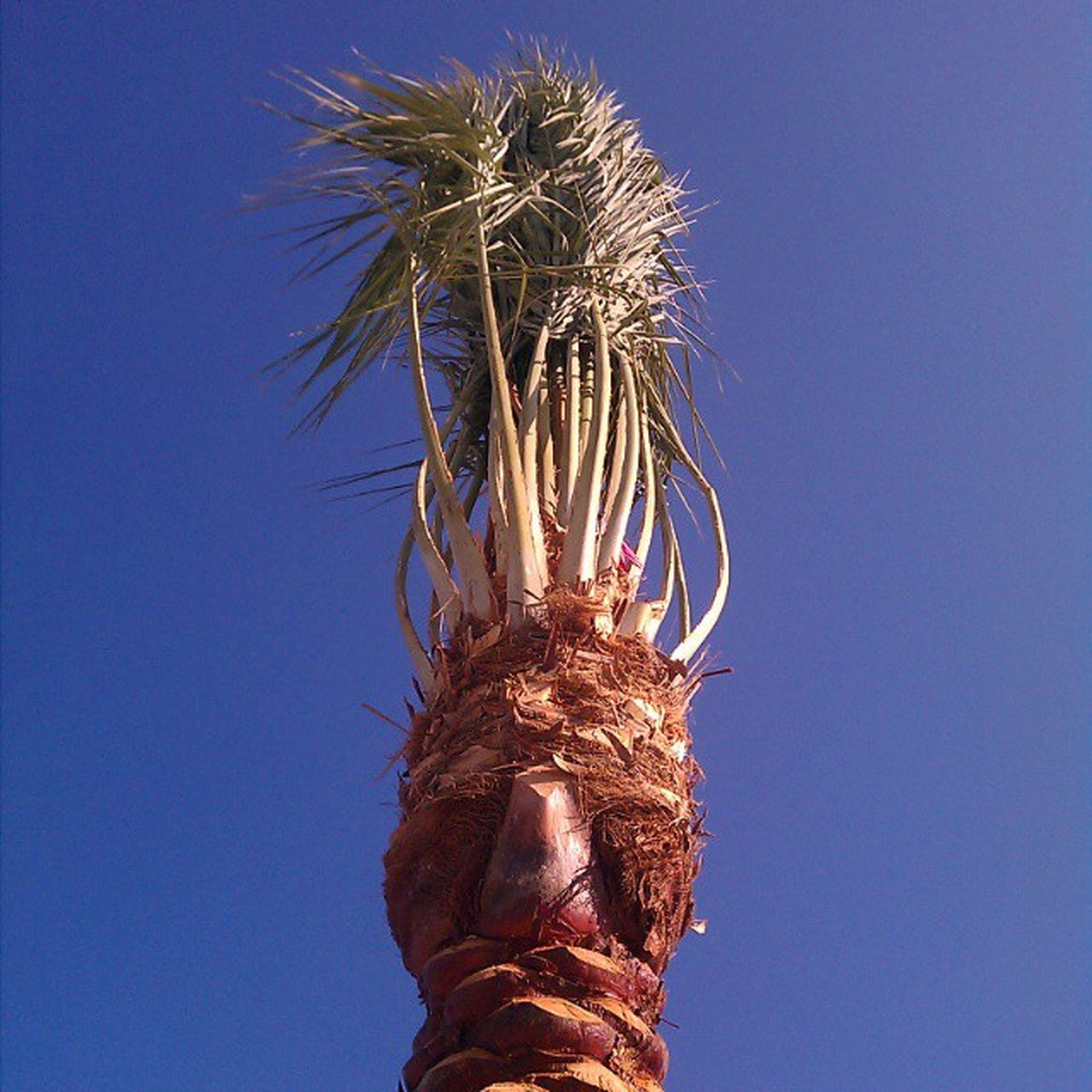 A. really. really. bad. hair.day. 9gag Facesinthings Palmtrees Palmporn POV Nothingisordinary Mydanapoint Badhairday Gmfm_0229