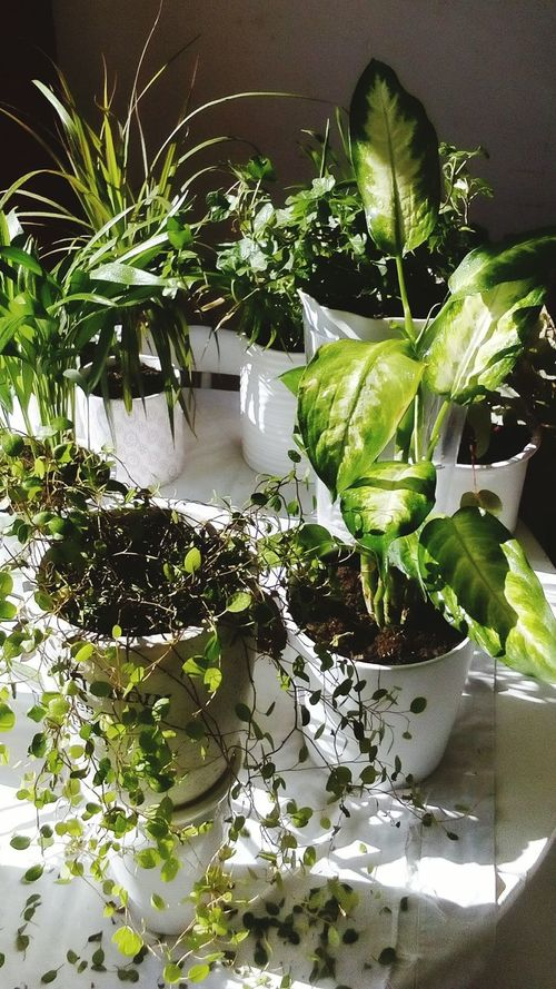 'Sunbathing' Green Green Green!  Green Nature Greenandwhite Plant Life Plants Sunbathing Indoor Plants Indoor Nature The Essence Of Summer