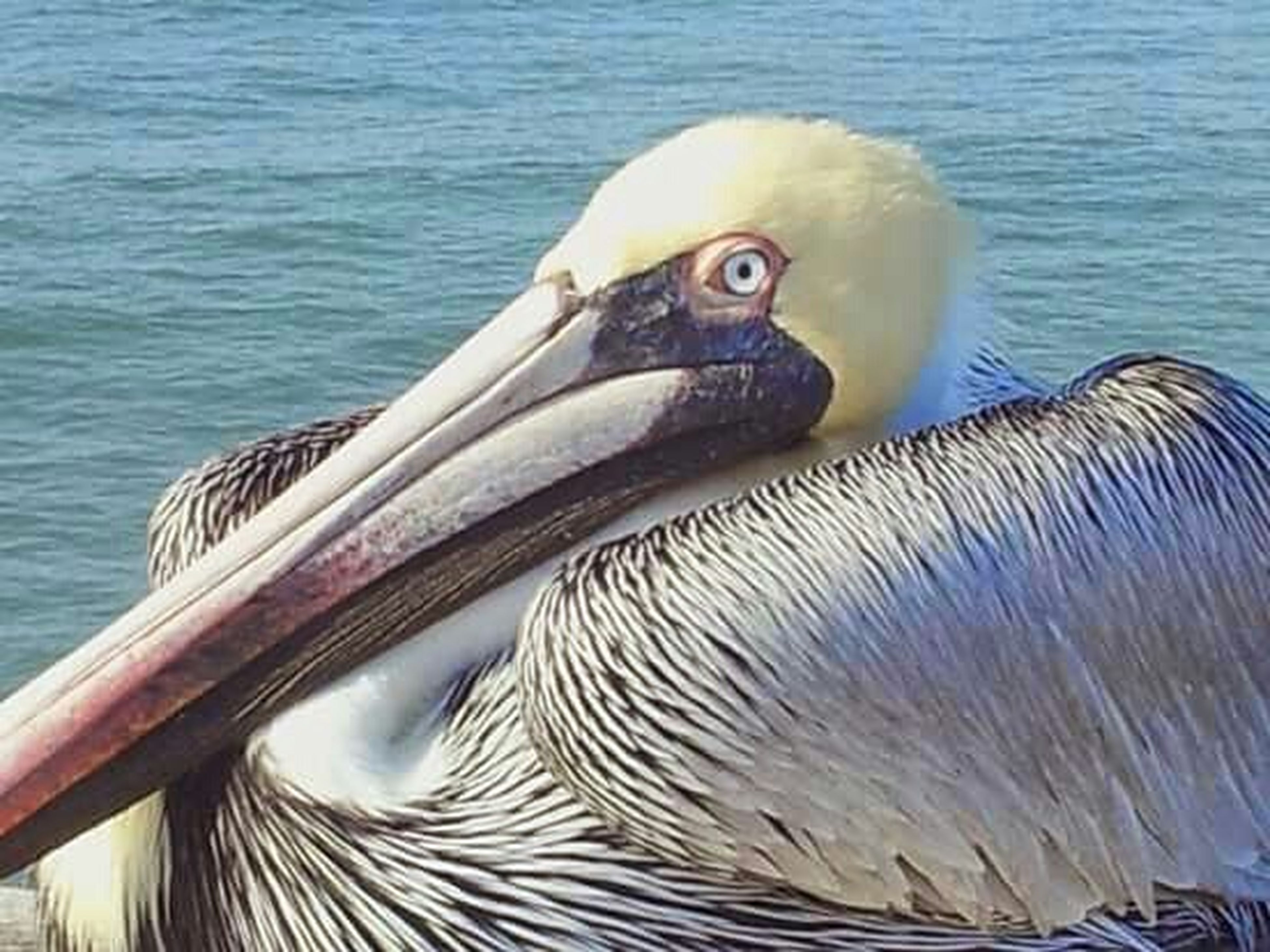 animal themes, bird, animals in the wild, wildlife, water, one animal, beak, pelican, swimming, lake, animal head, nature, rippled, close-up, swan, side view, water bird, outdoors, day