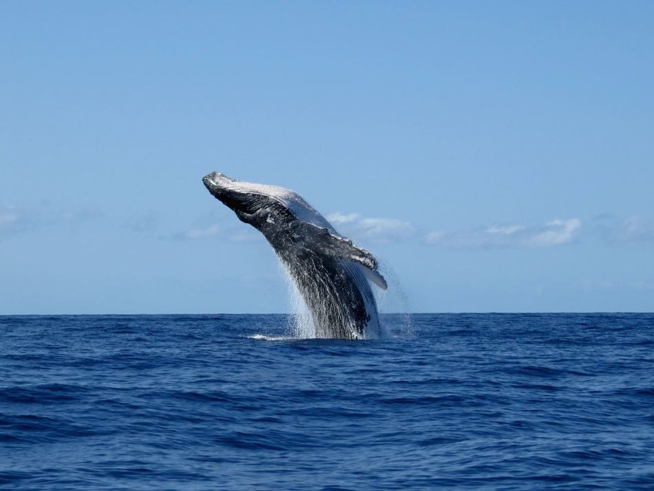 Beautiful stock photos of whale, Animal Body Part, Animal Themes, Animals In The Wild, Beauty In Nature