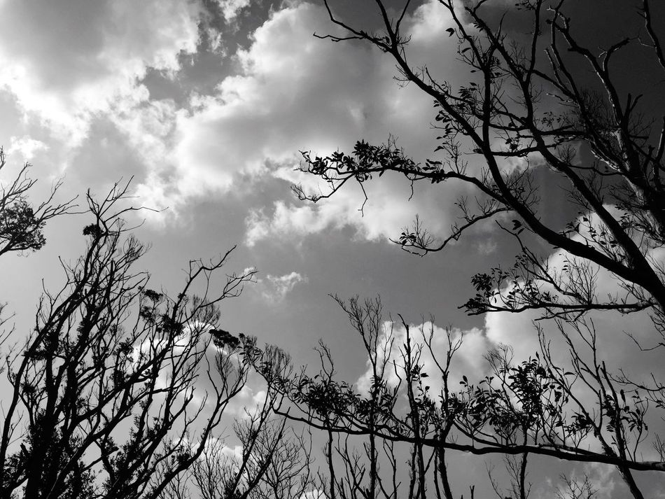 Tree Sky Nature Low Angle View Cloud - Sky Branch No People Outdoors Tranquility Beauty In Nature Growth Day Bare Tree Scenics Blackandwhite Black & White Blackandwhite Photography Black And White Photography Black&white Amami Island Kagoshima