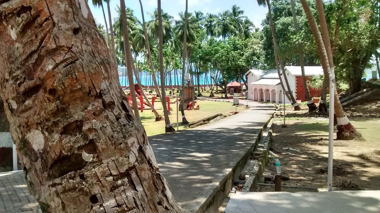 Havlock Andaman And Nicobar Coconut Palm Tree Sky Sea Park Way Path Toruist Spot Vaction Famous Place Outdoor Photography Swimming Resort Soil On The Ground Grass Beatiful City Beauty In Nature Beach